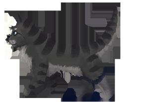 Cat_Final_B