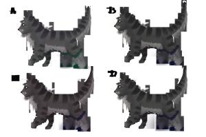 catbootsocks